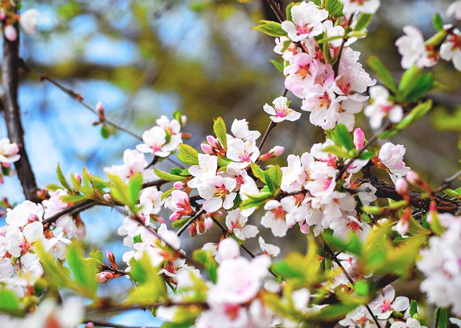 Reisen im Frühling